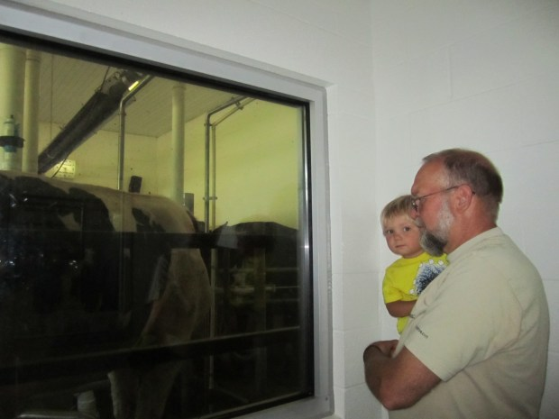 Looking in where they milk the cows