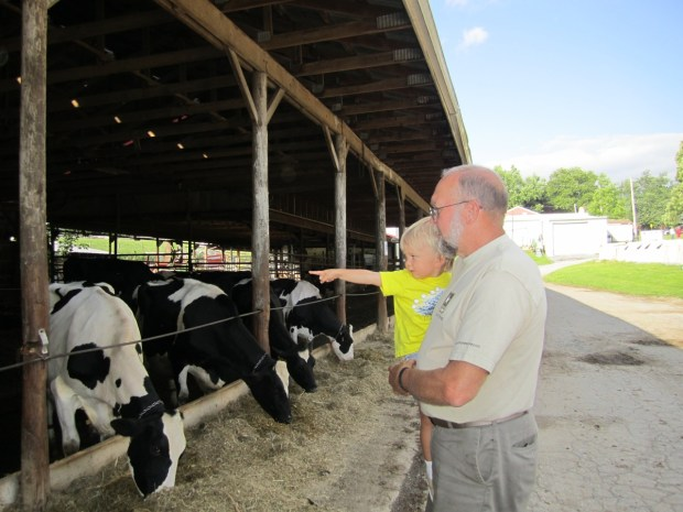 Visiting while the cows feed