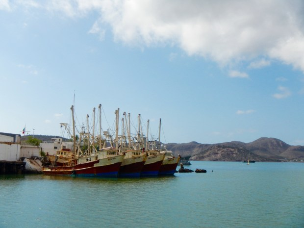 Some of the fishing fleet at Guaymas. Shrimping is supposedly big business here.