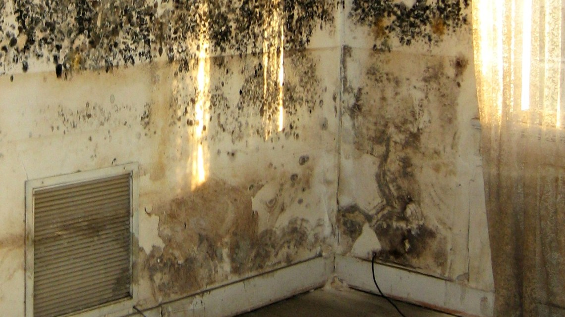 Image Result For How Do You Get Rid Of Mold In The Ba T
