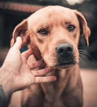 demanda por mordedura de perro
