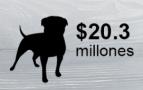 Mordedura de perro, Abogados de Accidentes Ahora