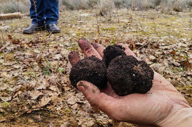 Truffle hunting tour from Barcelona