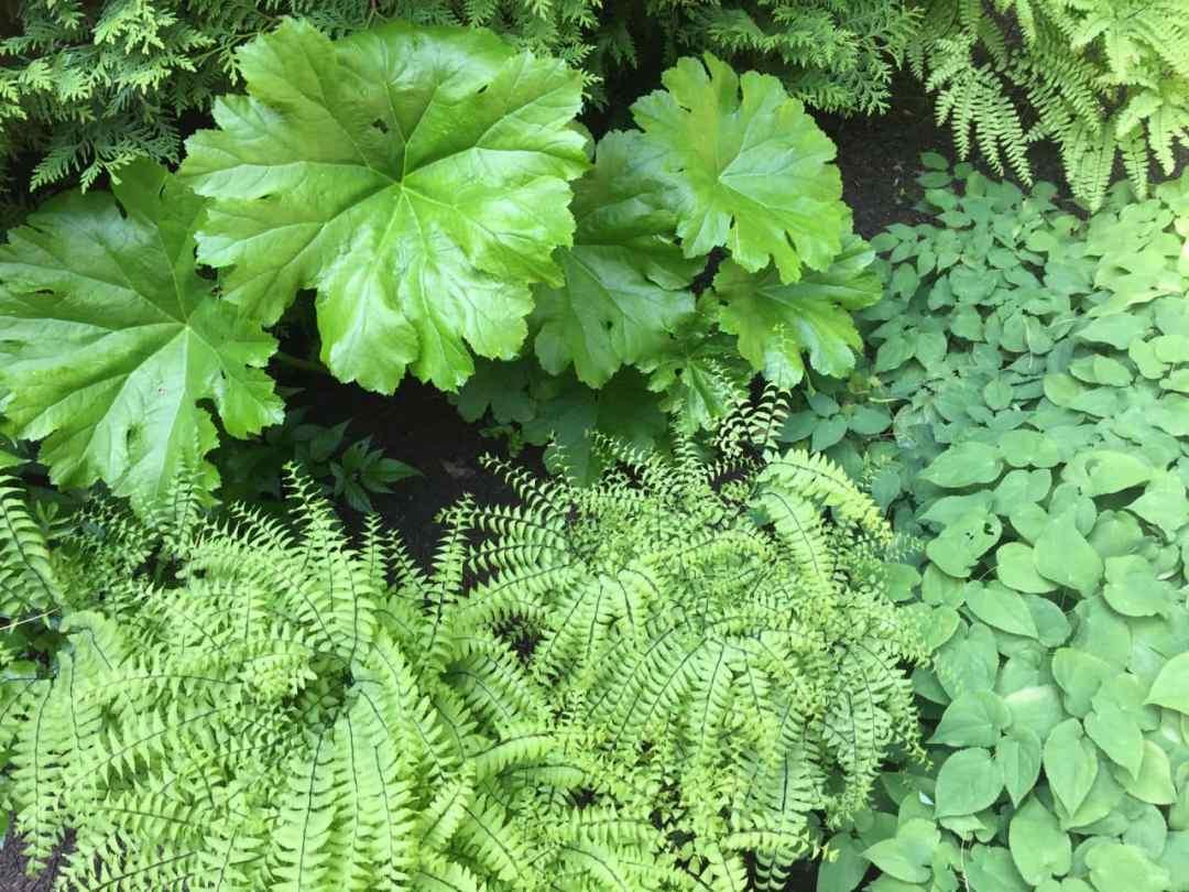 Abound Design - Native Plants