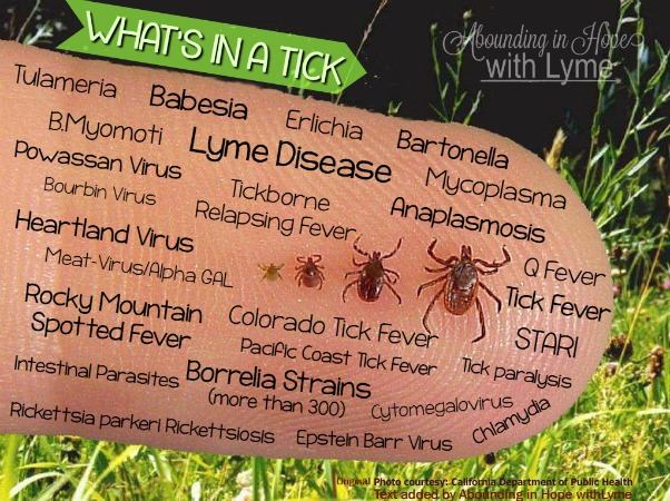 What's in a tick