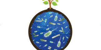 Life's Engines: How Microbes Made Earth Habitable by Paul G. Falkowski