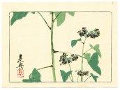Shibata Zeshin - Hana Kurabe - Flowering Plant 1878