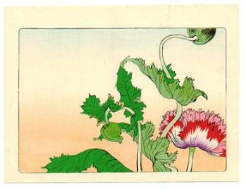 Shibata Zeshin - Hana Kurabe - Poppy 1878