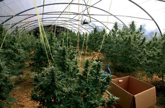 plantacion-marihuana-euskadi