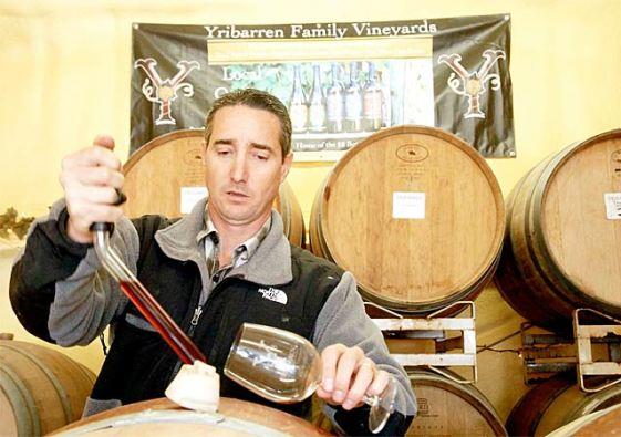 jeff-yribarren-vines