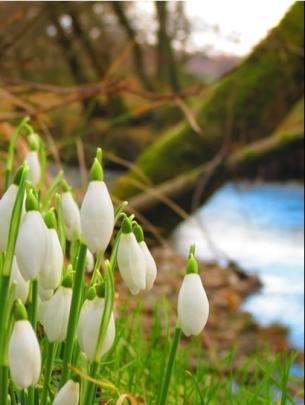 flores-escocia-vasca