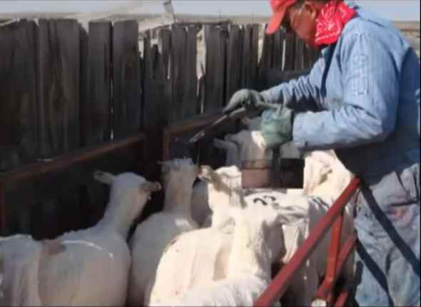 rancheros-vascos-usa-hoy