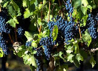 Rioja sales bring close to one billion pounds per year into the region Photo: Rex
