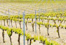 Artículo sobre los vinos vascos (sobre el txakoli) en el blog the Back Label