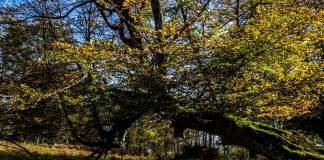 Una de las dos mayores masas forestales autóctonas del Contienete, se vuelve un lugar ágico en otono