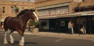 Budweiser | Beer Country