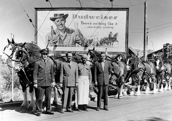 Budweiser and one of their most well-known images in the US: their Clydesdales