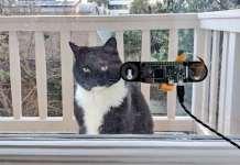 Sistema de detección del gato de la familia