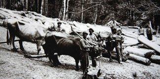 Imagen de leñadores vascos - El arca de no se