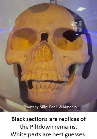 reconstructed skull