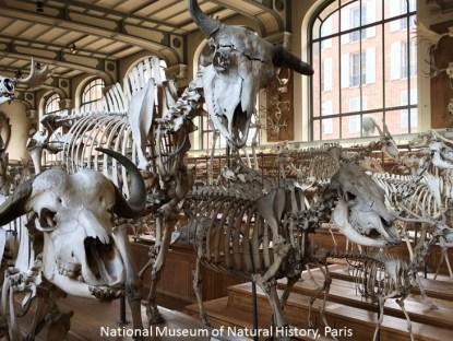 museum natural history paris