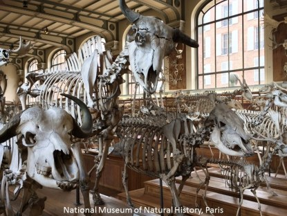 museum natural history paris