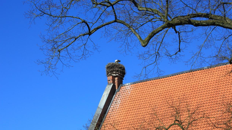 aboutcities-wienhausen-storch