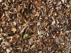 Das Herbstlaub raschelt unter den Füßen
