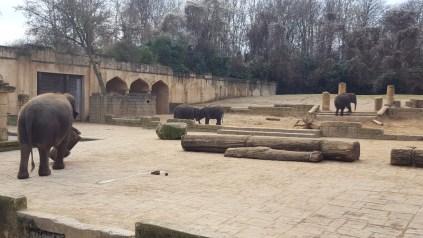 Elefanten spielen im Dschungelpalast