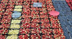 Schalen mit frischen Erdbeeren, Heidelbeeren, Himbeeren und Stachelbeeren reihen sich aneinander
