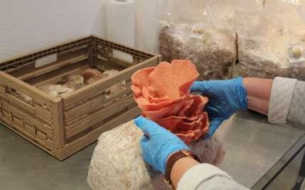 Bloggerin erntet Pilze bei der FungiFarm