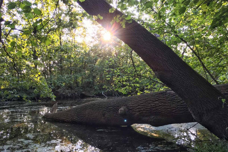 Ein Baumstamm liegt in einem Gewässer.