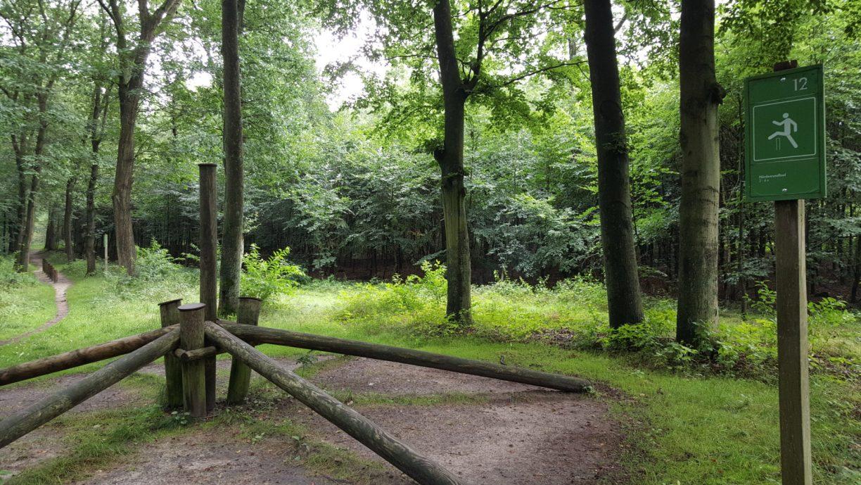 An Trimm-dich Station Nummer 12 sind die Baumstämme so angeordnet, dass man im Kreis läuft und immer über die einzelnen 5 Hindernisse hüpft.