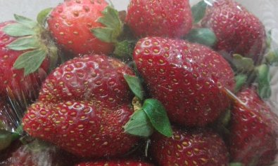 Baguio strawberries. Photo by Angie Pastor.