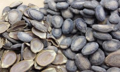 Buto ng Pakwan (Shells and Uncracked Seeds)