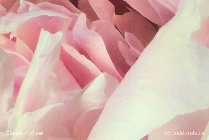 A closeup view of Peony Wallpaper featuring pink petals. Flower wallpaper sold by AboutMurals.ca.