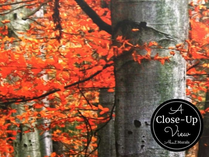 A closeup view of a red forest wallpaper showing the autumn leaves against grey tree trunks. Forest wallpaper sold by AboutMurals.ca.