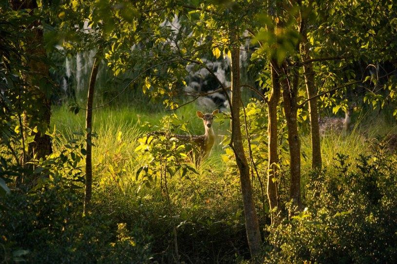 Sundarban, Bangladesh