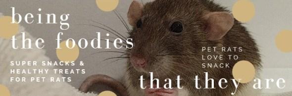 about pet rats, pet rats, pet rat, rats, rat, fancy rats, fancy rat, ratties, rattie, pet rat care, pet rat info, best pet, cute pets, pet rat supplies, pet rat diet, best pet rat diet, best rat diet, pet rat food, pet rat nutrition, pet rat health, pet rat snacks, pet rat snack, pet rat treat, pet rat treats