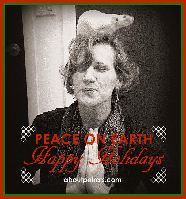 #pet rat #pet rats #rat #rats #fancy rat #fancy rats #pet rat care #about pet rats #pet rat holiday #rat holiday #pet rat peace on earth