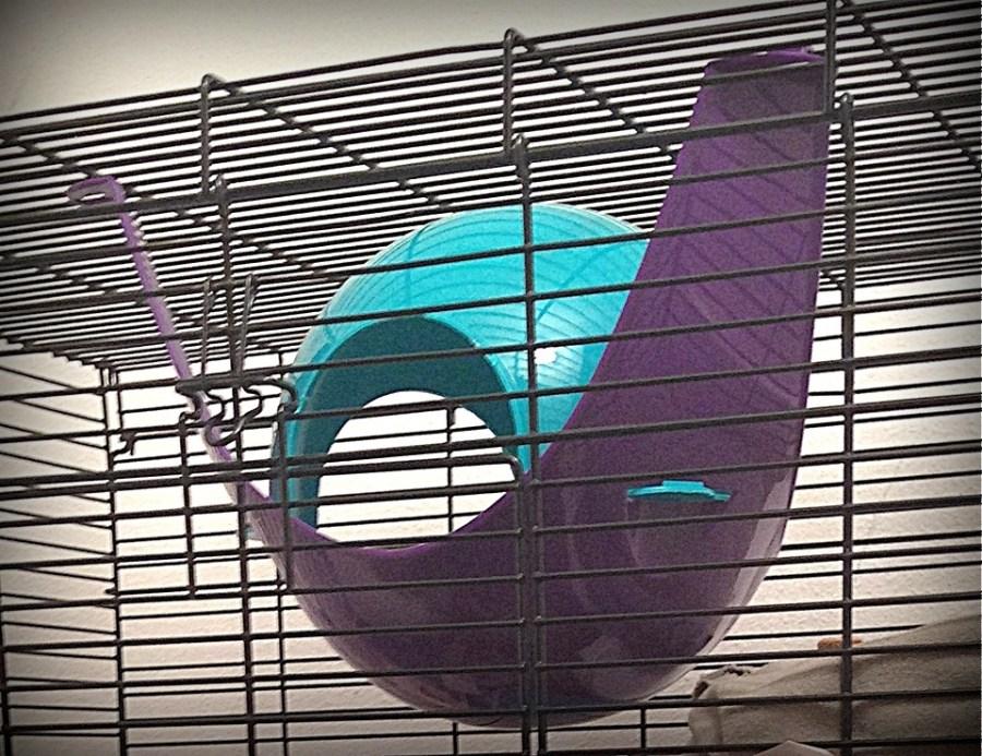 about pet rats, pet rats, pet rat, rats, rat, fancy rats, fancy rat, ratties, rattie, pet rat care, pet rat info, pet rat information, pet rat supplies, pet rat cage, pet rat cage interior, what to put inside your pet rat cage, pet rat cage décor, pet rat bedding, pet rat space pod
