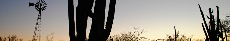 silhouettes of saguaros at sunset