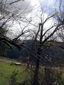 Trees mangled by the storm