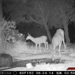 deer_at_pond