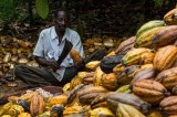 The Cocoa Slave Plantations of Africa in the 21st Century