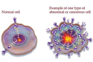 nomal-vs-cancer