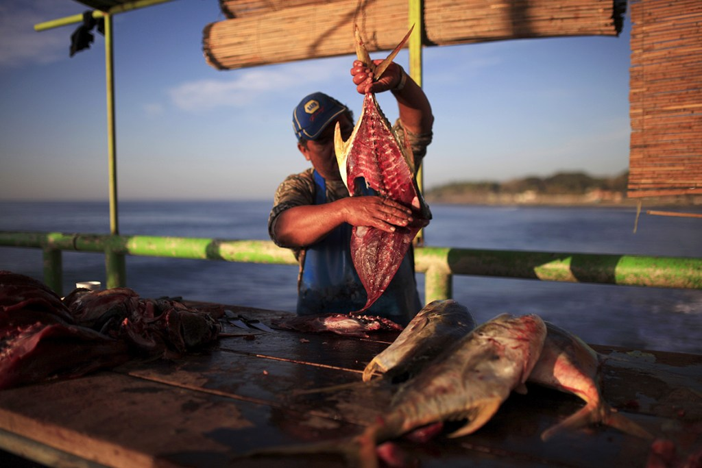 19 February 2016: A man cuts a fish at the fishermen's dock in La Libertad, El SalvadorJose Cabezas/ Reuters