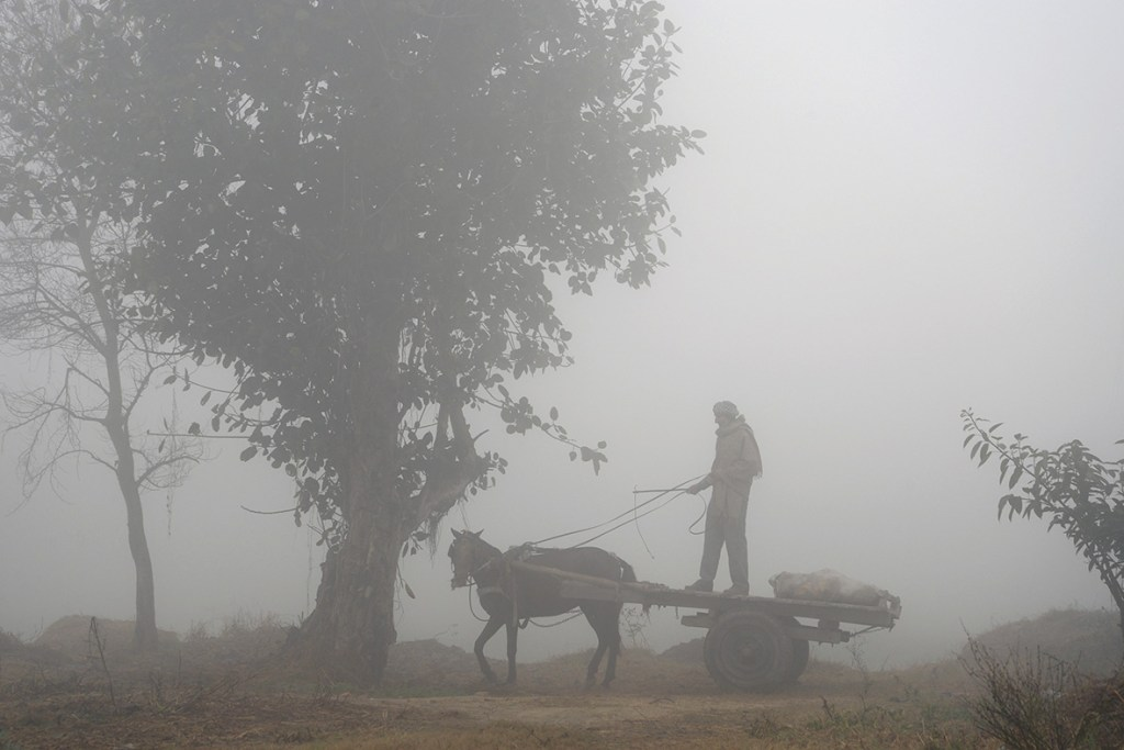 8 January 2016: An Indian farmer stands on a cart pulled by a horse during foggy weather in Jalandhar (Shammi Mehra/ AFP)