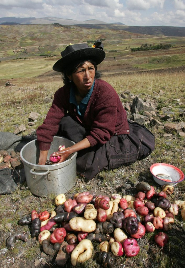 28 May 2007: A woman from the San Jose de Aymara community washes native potatoes during harvest in Huancavelica, Peru (Eitan Abramovich/ AFP)