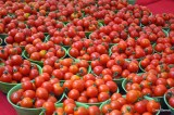 Why Nigeria's Tomato Paste Industry is Not Thriving
